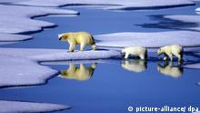 Klimawandel Eisbären