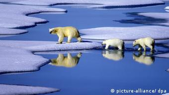 Polar bears (photo: Hinrich Bäsemann)