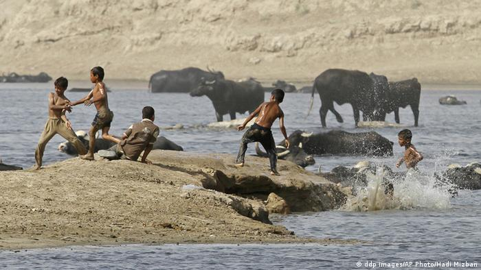 Children play with cattle in the in the Tigris river