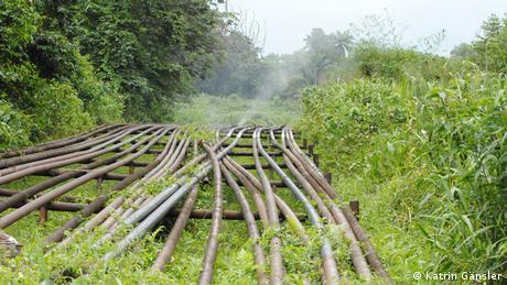 Oil pipes, one of which is emitting steam, in a green forest