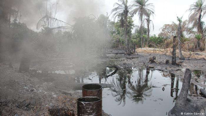 Oil contaminated fields along the Niger Delta River Foto: Katrin Gänsler