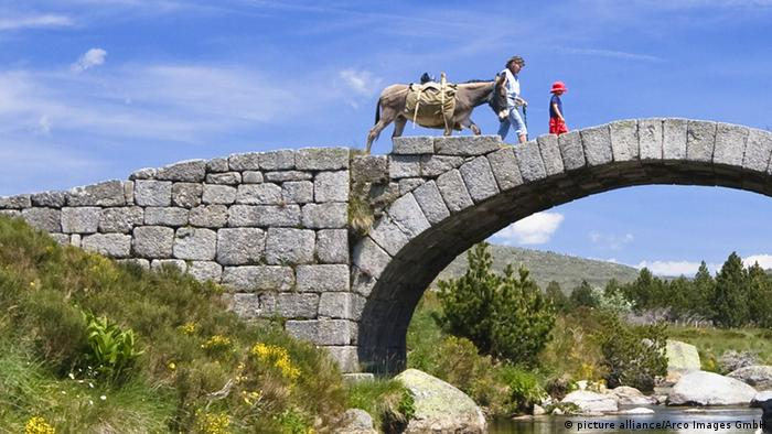 Donkey on a bridge
