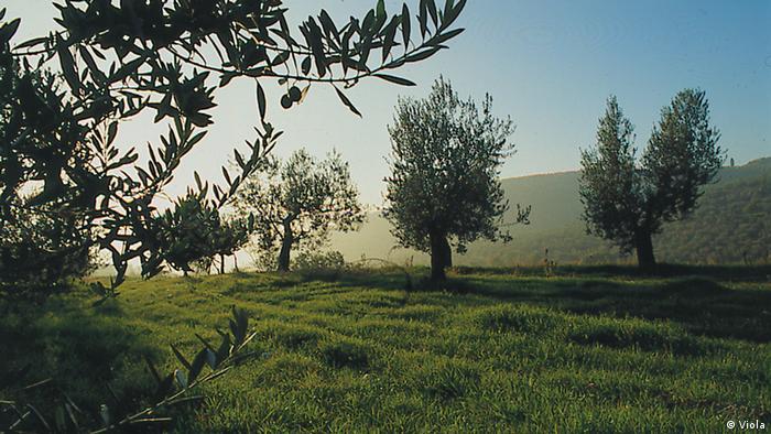Bildergalerie Viola Oliven Farm in Sant Eraclio in Umbrien