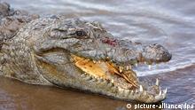 Krokodil in Burkina Faso