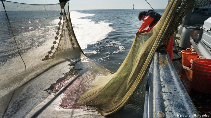 Deutscher Fischereitag in Papenburg