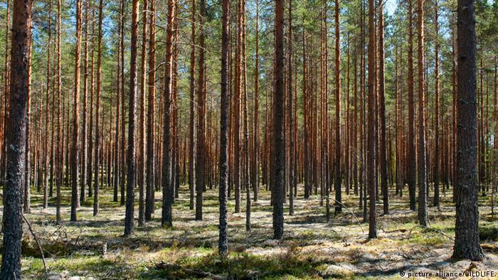 Bosque en Suecia.