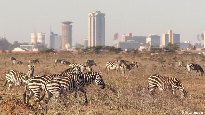 Nairobi Skyline Kenia Zebras