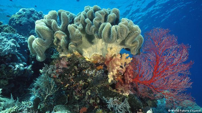 Korallenriff in Palau (Foto: http://www.worldfuturecouncil.org)