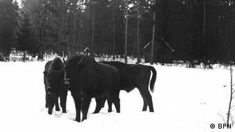 History of Bialowieza National Park