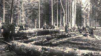 History of Bialowieza National Park