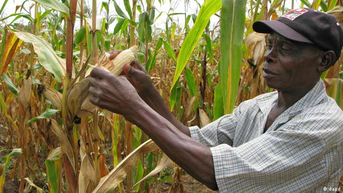 Farmer works on his maize farm in Mozambique. (Foto:Donna Bryson/AP/dapd)