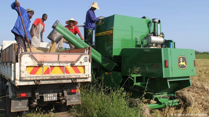 Machamba de arroz na província de Gaza, Moçambique. Um projeto que envolve o governo e a China