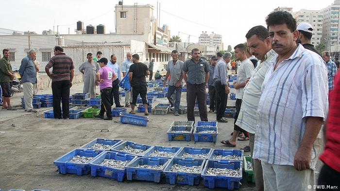 Plastic tubs with the catch of the previous night on the fish market of Gaza City (picture: Bettina Marx / DW)
