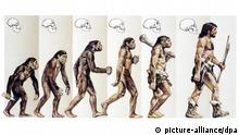 Prehistory - Physical evolution of hominids - Drawing. 01.01.2005. Foto: De Agostini/World Illustrated/Photoshot +++(c) dpa - Report+++ pixel