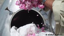 Afghanistan Blütenanbau