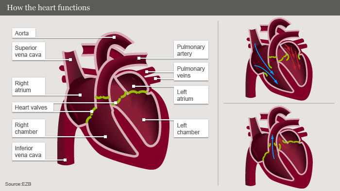 Infographic explaining how the heart works