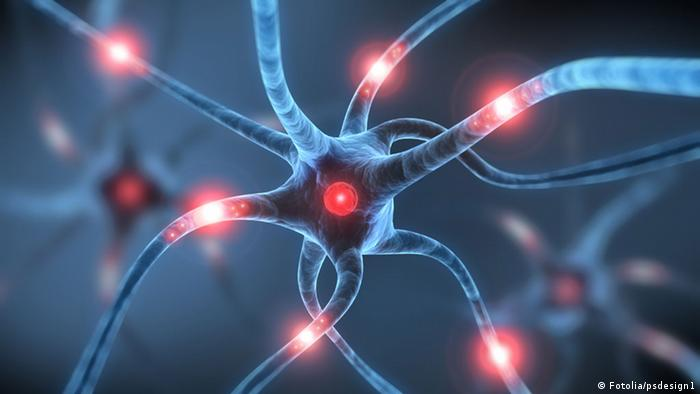 An image illustrating nerve cells in the brain (Copyright: psdesign)