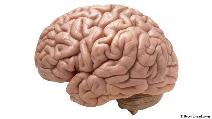 human brain on white background © marksykes #26636186