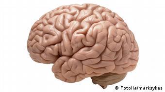 Ljudski mozak - još uvijek velika nepoznanica