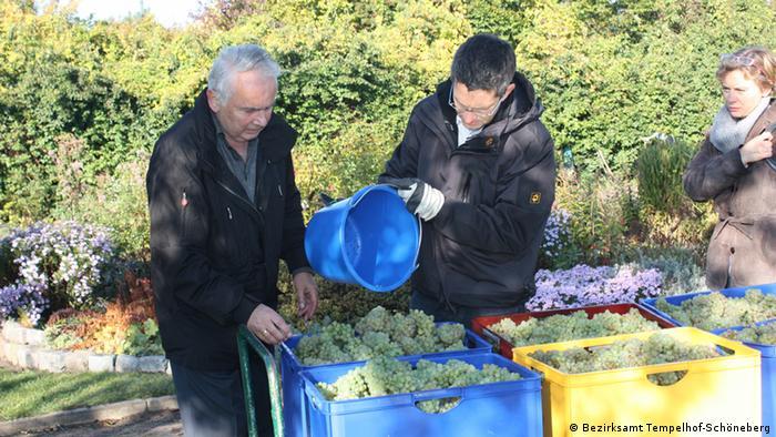 Rüdiger Jakesch, former mayor of Berlin's Schöneberg district, and district city council member Oliver Schworck harvest grapes