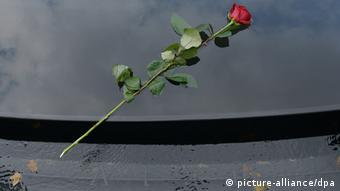 Una rosa en memoria de las víctimas del nazismo.