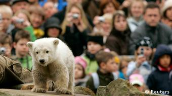 Polar bear baby Knut at the Berlin Zoo (Photo: AP/Archiv Zoo Berlin)