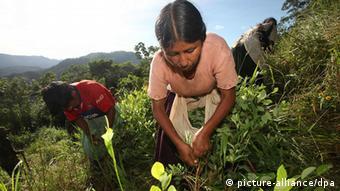 América Latina es una de las regiones principales productoras de hoja de coca del mundo.