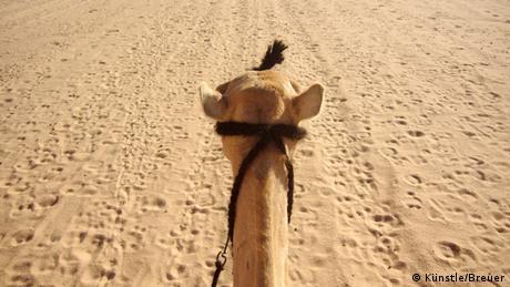 Blick vom Kamelrücken