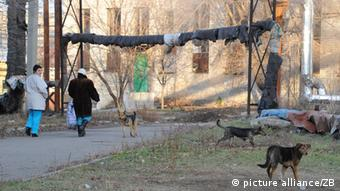 Dogs running free in Donezk Photo: Jens Kalaene dpa