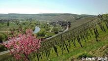 Weinarchitektur in Franken