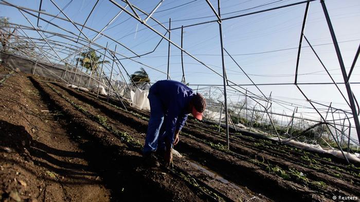 Ein Mann inspiziert auf einem Ackerfeld die Schäden, die Sandy angerichtet hat. Foto: rtr