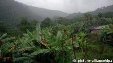Im Nebel liegt der Atlantische Regenwald nahe der ehemaligen brasilianischen Kolonialstadt Parati im Bundesstaat Rio de Janeiro, aufgenommen am 29.04.2007. Die Stadt Parati aus dem 17. Jahrhundert (heute 27.000 Einwohner) gehört zum UNESCO-Weltkulturerbe. Besondere Bedeutung erreichte Parati im Jahre 1640 durch die Verschiffung des Goldes von Minas Gerais nach Rio de Janeiro und Portugal. Heute leben die Einwohner von Parati hauptsächlich vom Tourismus. Bootsfahrten zu den 65 Inseln in der gleichnamigen Bucht und Touren durch den Atlantischen Regenwald gehören zu den Attraktionen von Parati. Foto: Ralf Hirschberger +++(c) dpa - Report+++