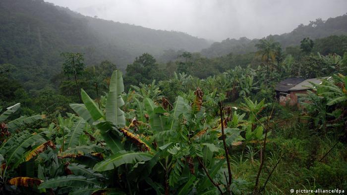 Regenwald in Brasilien (Foto: Ralf Hirschberger/dpa - Report)