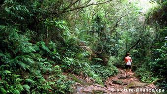 Dicht wuchert nahe Antonina im Bundesstaat Parana von Brasilien der atlantische Regenwald Mata Atlantica (Foto vom 18.12.2004). Der Regenwald erstreckte sich einst über 4000 Kilometer vom südlichen Espirito Santo bis nördlich von Rio de Janeiro. Foto: Ralf Hirschberger +++(c) dpa - Report+++