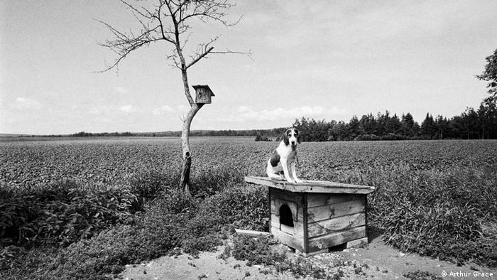 Coon dog, Maine