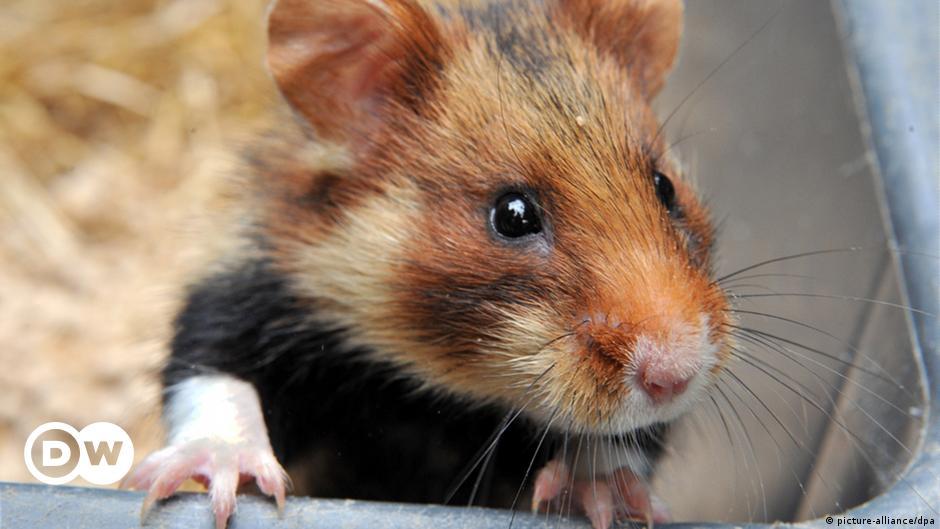 Hamster stirbt anzeichen