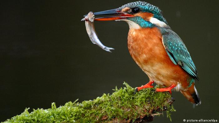 چرا پرندگان کوچک در زمستان صبحانه نمیخورند؟
