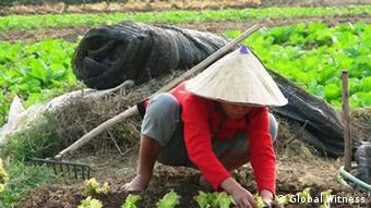 A Lao agricultural worker (Photo: Global Witness)