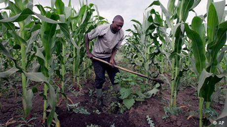 A farmer prepares water channels in his maize field in Ngiresi near the Tanzanian town of Arusha on Tuesday, July 17, 2007. Millions of farmers around the world will be affected by a growing movement to change one of the biggest forces shaping the complex global food market: subsidies. Many experts agree farmers need help to grow food year in and year out, but Western farmers may get too much and African farmers too little. (AP Photo/Karel Prinsloo)
