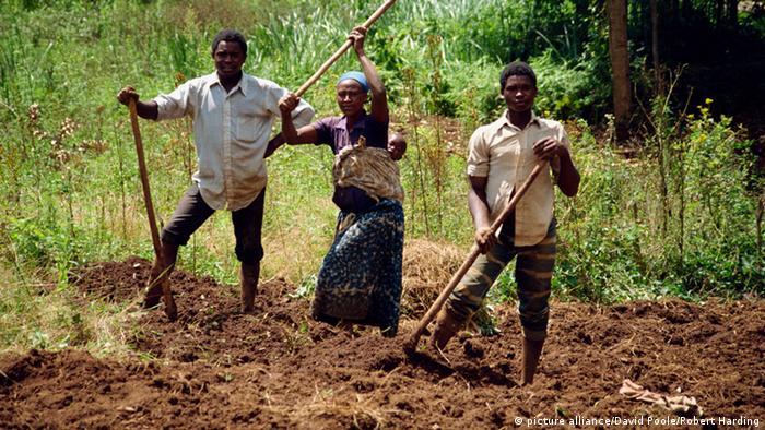 Bauern auf einem Feld in Uganda