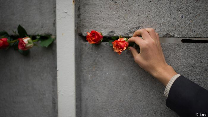 A hand puts a rose into a memorial wall