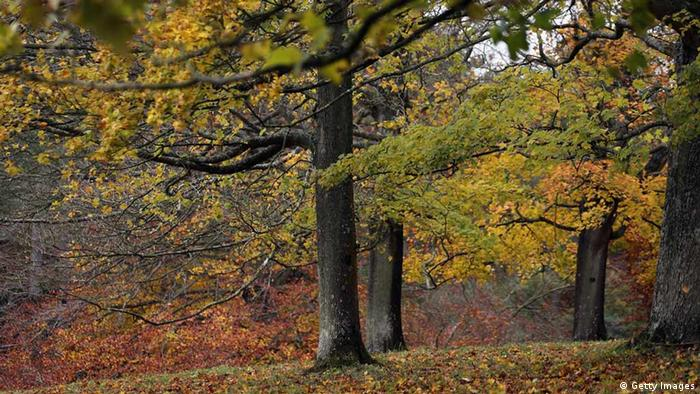Herbstimpression England (Getty Images)