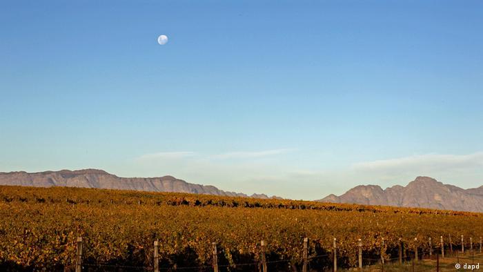 Vineyards in South Africa (Foto:Schalk van Zuydam/AP/dapd)