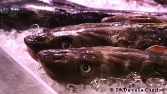 Cod on display at SlowFisch Bremen (Daniella Cheslow/DW).