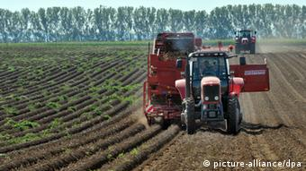 A large, red farm machine collects potatoes from dirt rows on a sunny day. (Photo: Martin Schutt/dpa)
