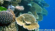 Verschiedene Korallenarten im Great Barrier Riff in Australien