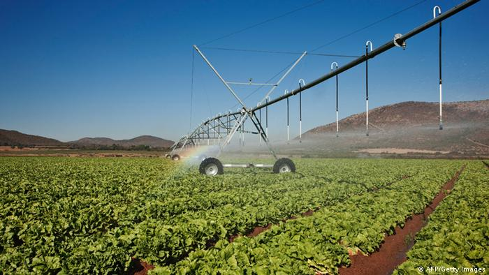 A field with crops is watered by an irrigation system (photo: AFP/Getty Images)