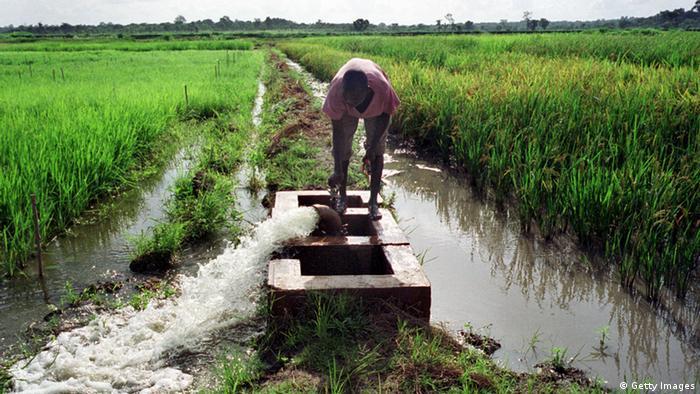 watering fields in Africa