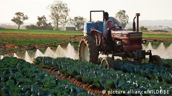 Erntearbeiter mit einem Trecker sprueht ein Kohlfeld (Foto: picture alliance/WILDLIFE)