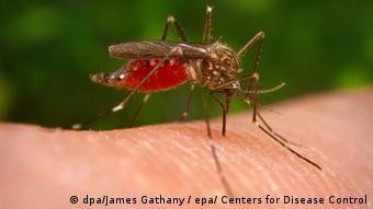 Asya calı sivrisineği batı nil viruesue adlı bir virues taşıyor
